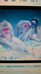 181202 サルと温泉