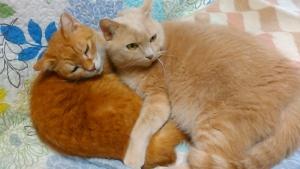 190211 猫が二人で