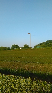 190613 青空が朝から
