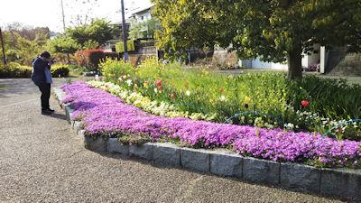4/21 桜の散歩道 入口の花壇