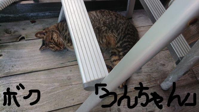 うんちゃんサム1_LI