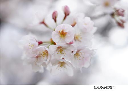 12 はなやかに咲く