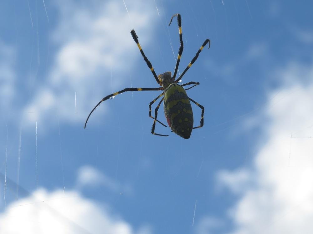 1雨上がり蜘蛛IMG_5136