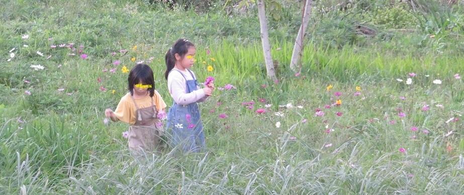 1花摘むIMG_5150 - コピー
