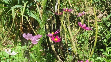 26暖かで花IMG_4820
