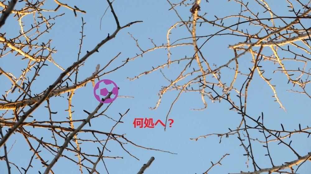 3梢にIMG_5677 - コピー