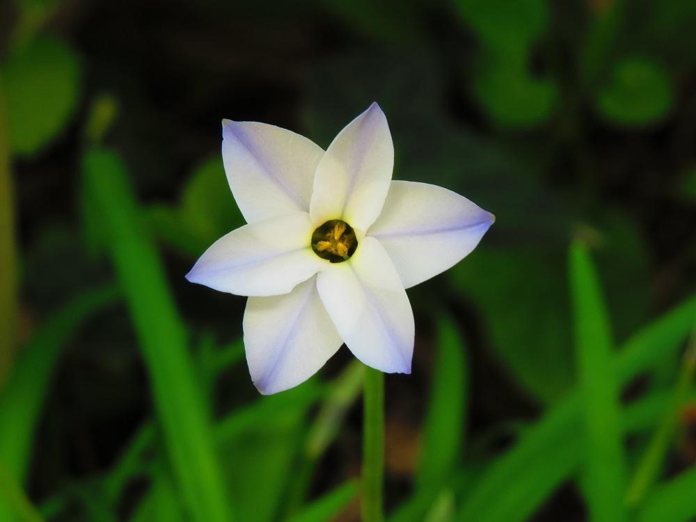18花ニラIMG_3239