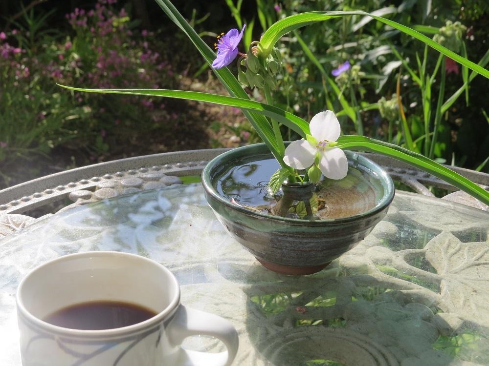 朝のひと時IMG_3991