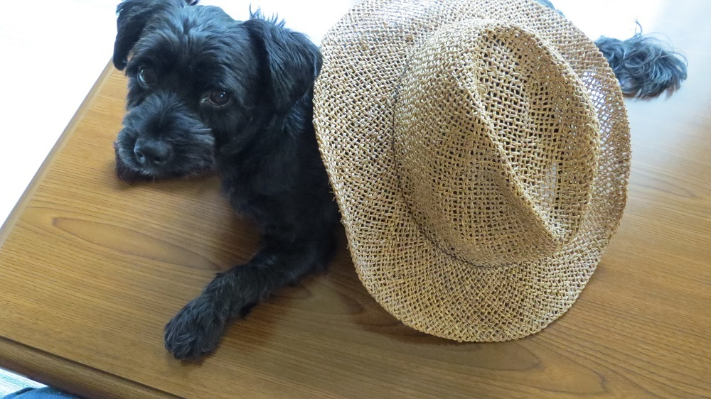 帽子IMG_4595