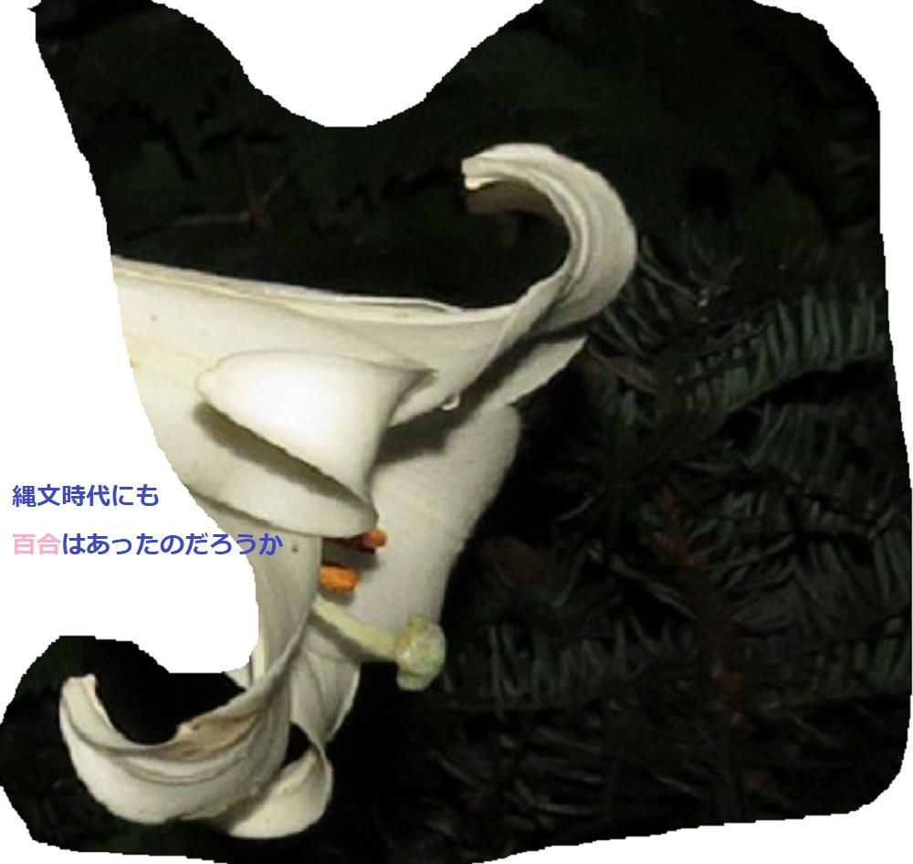 2白百合IMG_4815 - コピー - コピー - コピー