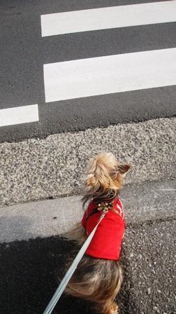 20190220 暖かい4横断歩道