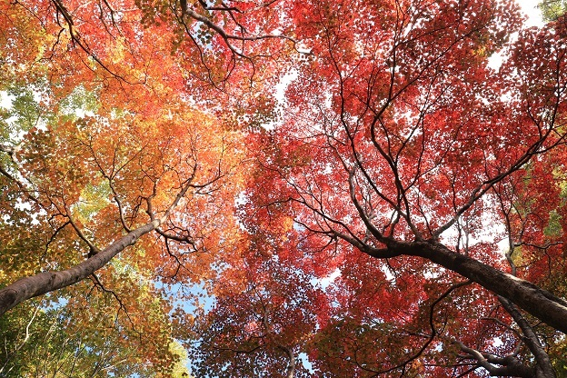 紅葉山公園4
