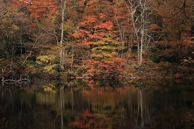 杉池紅葉2