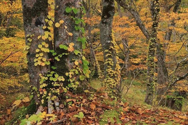 杉池紅葉1