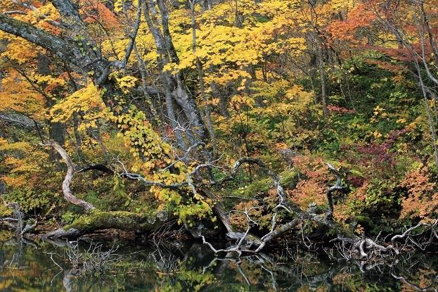 杉池紅葉10