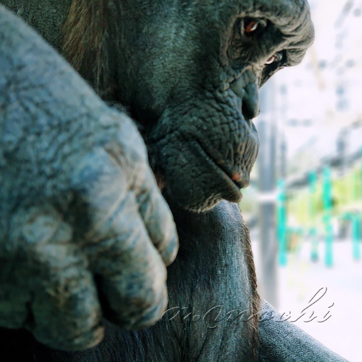 chimpanzee_190402.jpg