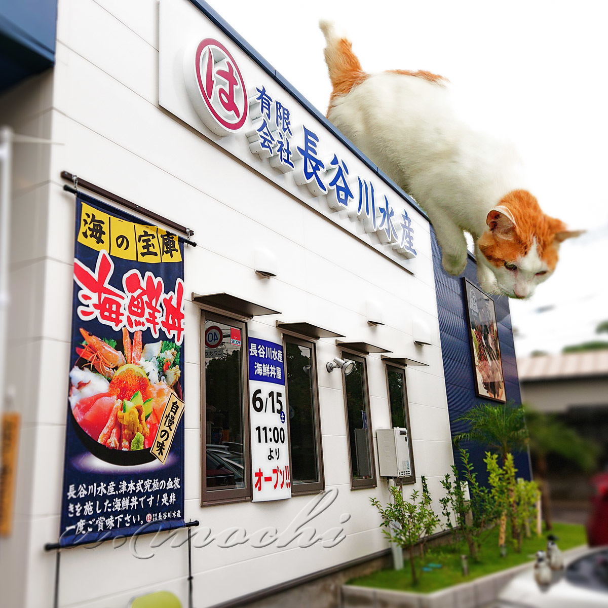 hasegawa_shop.jpg
