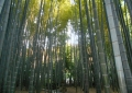 鬱蒼たる竹林