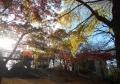 西ノ原中央公園・紅葉
