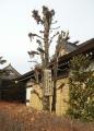 水宮神社の御神木
