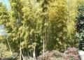 多福寺・裏の竹林
