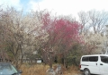 朝日天神神社・駐車場