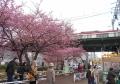 桜越しに通過する電車