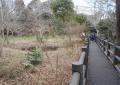 湿地帯に渡されたコンクリート製の小道