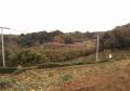 遠くに小松が池の河津桜が見える