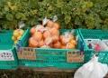 柑橘類も売られている
