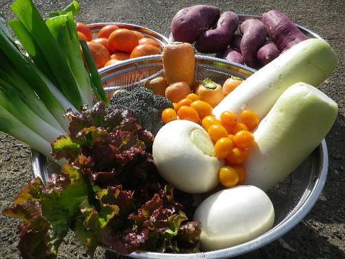 野菜収穫 2018 11 24-1