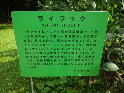 北海道大学植物園 2019 10 3-7