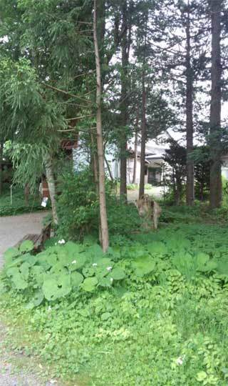 20180610_kappabuchi_023.jpg