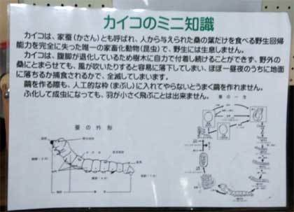 20180610_tono_densyoen_096.jpg