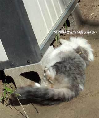 20190218_shimizudera_cat004.jpg