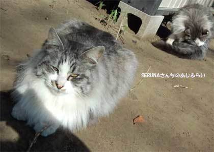 20190218_shimizudera_cat005.jpg
