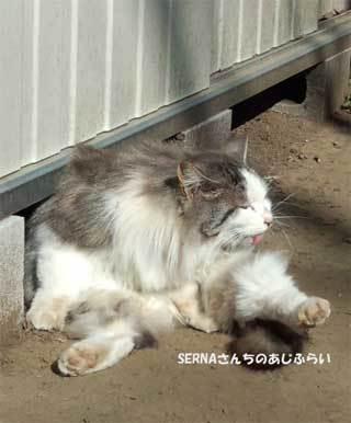 20190218_shimizudera_cat007.jpg