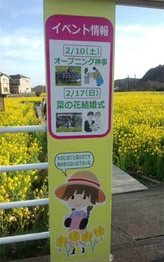 20190225_izu_nanohana_002.jpg
