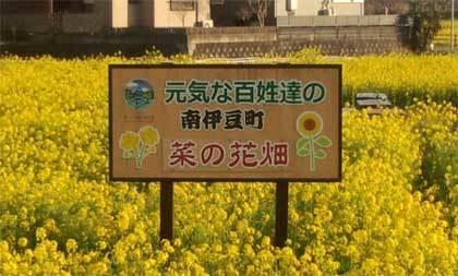 20190225_izu_nanohana_003.jpg