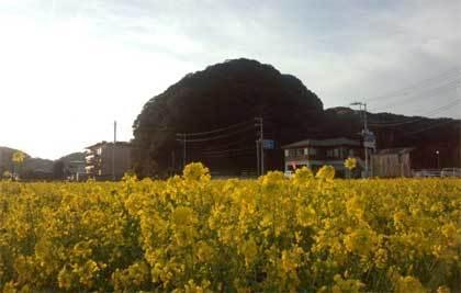 20190225_izu_nanohana_009.jpg