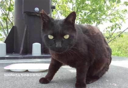 20190428_ooigawa_cat_007.jpg