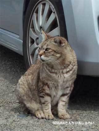 20190428_ooigawa_cat_009.jpg