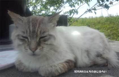 20190428_ooigawa_cat_011.jpg