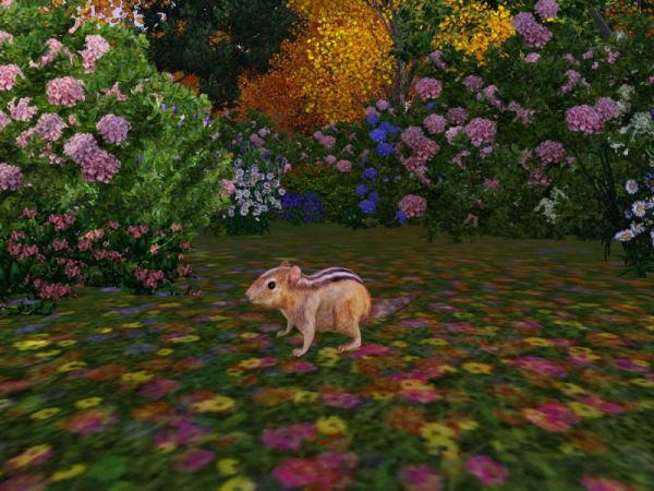 [Download]リス(Sims3)