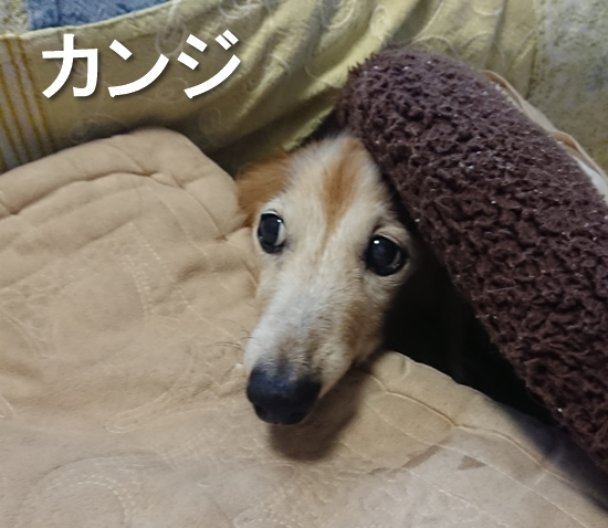 10_カンジ