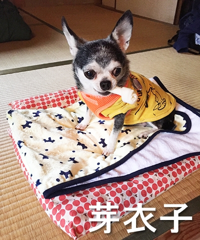 12_芽衣子
