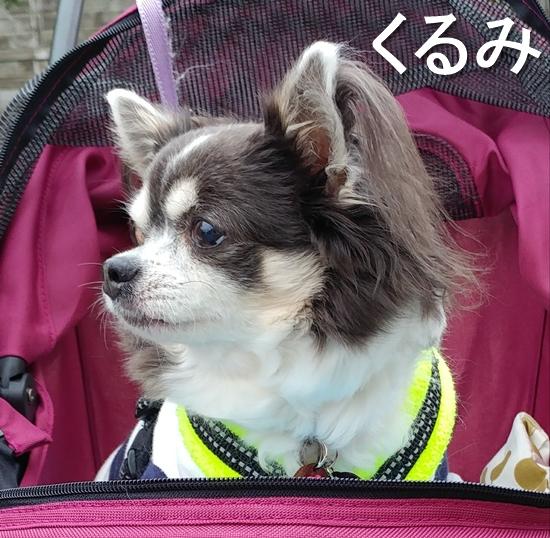 14_くるみ