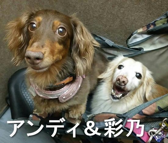 12_アンディ&彩乃