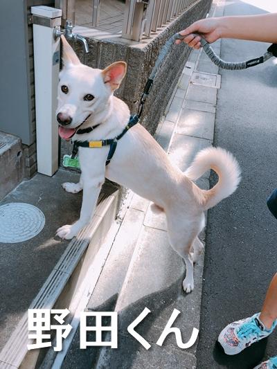 7_野田くん