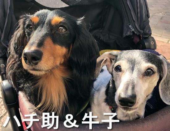 3_ハチ助&牛子